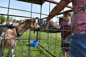 Elementary students feed a goat during Ag Day