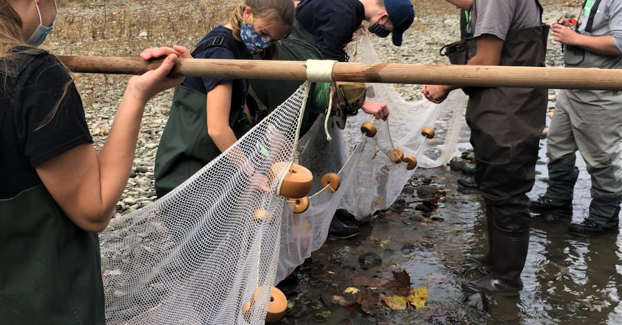 AP environmental science students help DEC catch fish for water quality study