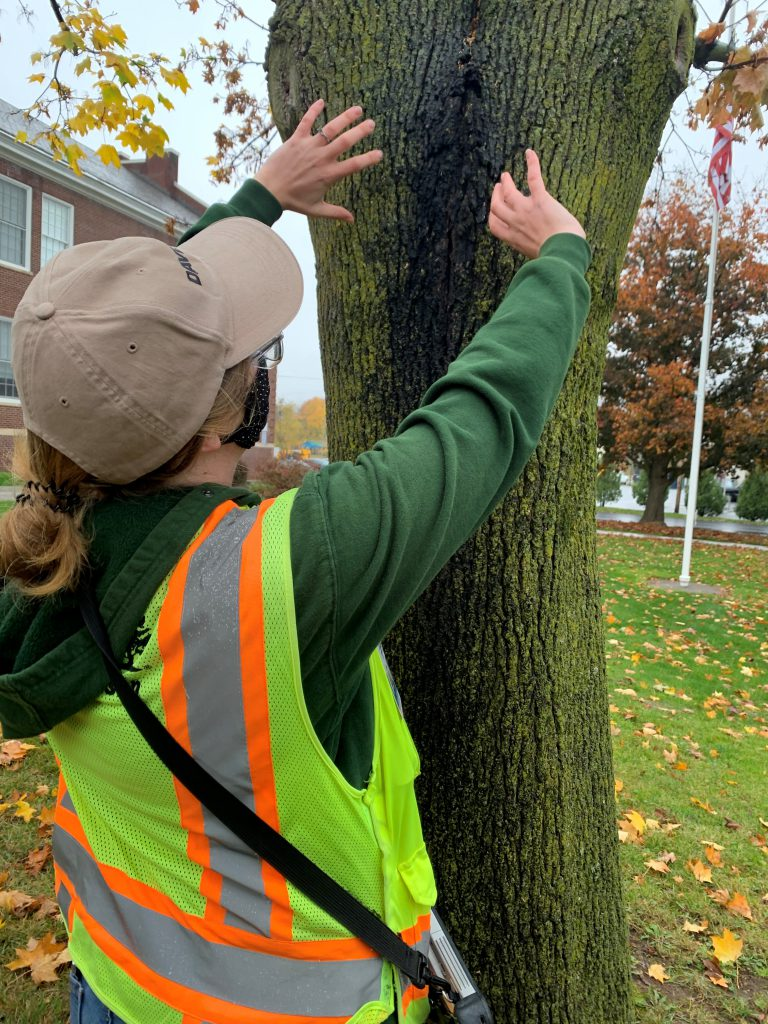 Arborist showing where the tree is damaged